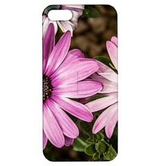 Beautiful Colourful African Daisies  Apple Iphone 5 Hardshell Case With Stand by OZMedia