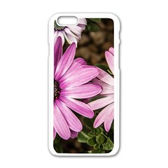 Beautiful Colourful African Daisies  Apple Iphone 6/6s White Enamel Case