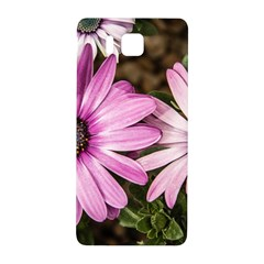 Beautiful Colourful African Daisies  Samsung Galaxy Alpha Hardshell Back Case by OZMedia