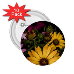 Beautiful Colourful African Daisies  2.25  Buttons (10 pack)  by OZMedia