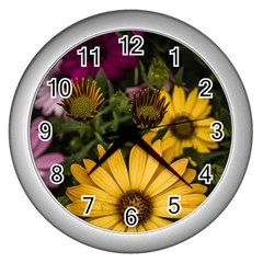 Beautiful Colourful African Daisies  Wall Clocks (silver)  by OZMedia