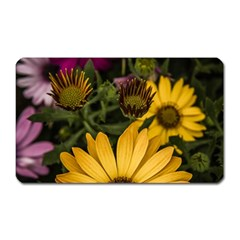 Beautiful Colourful African Daisies  Magnet (rectangular) by OZMedia