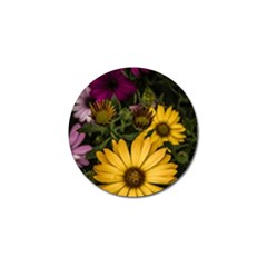 Beautiful Colourful African Daisies  Golf Ball Marker (10 Pack) by OZMedia