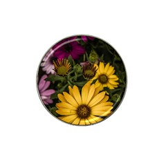 Beautiful Colourful African Daisies  Hat Clip Ball Marker by OZMedia