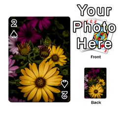 Beautiful Colourful African Daisies  Playing Cards 54 Designs  by OZMedia