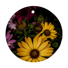 Beautiful Colourful African Daisies  Round Ornament (two Sides)  by OZMedia