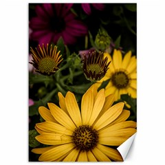 Beautiful Colourful African Daisies  Canvas 12  X 18   by OZMedia