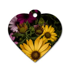 Beautiful Colourful African Daisies  Dog Tag Heart (one Side) by OZMedia