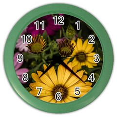Beautiful Colourful African Daisies  Color Wall Clocks by OZMedia