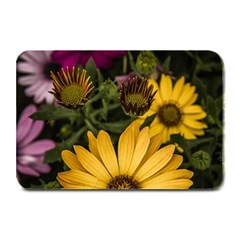 Beautiful Colourful African Daisies  Plate Mats by OZMedia