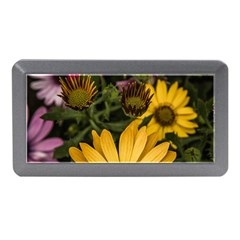 Beautiful Colourful African Daisies  Memory Card Reader (mini) by OZMedia