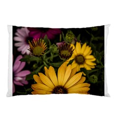 Beautiful Colourful African Daisies  Pillow Cases (two Sides) by OZMedia