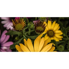 Beautiful Colourful African Daisies  You Are Invited 3d Greeting Card (8x4)  by OZMedia