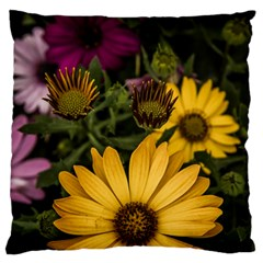 Beautiful Colourful African Daisies  Large Cushion Cases (two Sides)  by OZMedia