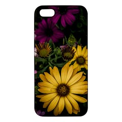 Beautiful Colourful African Daisies  Apple Iphone 5 Premium Hardshell Case by OZMedia