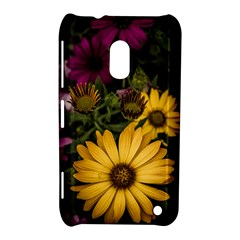 Beautiful Colourful African Daisies  Nokia Lumia 620 by OZMedia