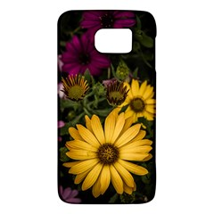 Beautiful Colourful African Daisies  Galaxy S6 by OZMedia