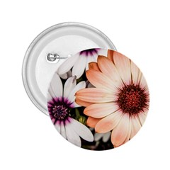 Beautiful Colourful African Daisies 2 25  Buttons by OZMedia