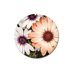Beautiful Colourful African Daisies Magnet 3  (round) by OZMedia