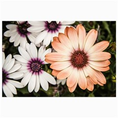 Beautiful Colourful African Daisies Collage 12  X 18  by OZMedia