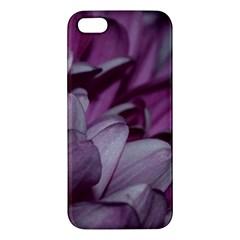 Purple! Apple Iphone 5 Premium Hardshell Case by timelessartoncanvas