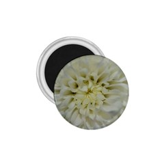 White Flowers 1.75  Magnets