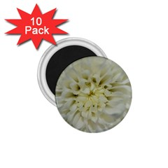 White Flowers 1 75  Magnets (10 Pack)  by timelessartoncanvas