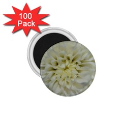 White Flowers 1 75  Magnets (100 Pack)  by timelessartoncanvas