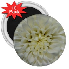 White Flowers 3  Magnets (10 pack)