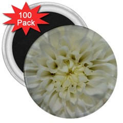 White Flowers 3  Magnets (100 pack)
