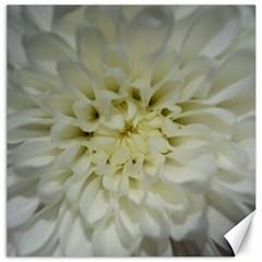 White Flowers Canvas 12  x 12
