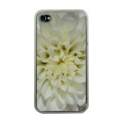 White Flowers Apple iPhone 4 Case (Clear)