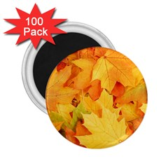 Yellow Maple Leaves 2 25  Magnets (100 Pack)  by trendistuff