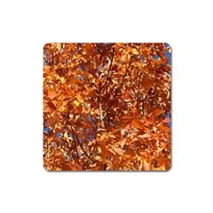 Orange Leaves Square Magnet by trendistuff
