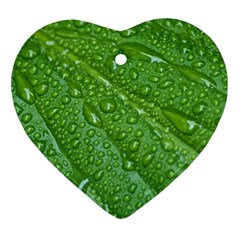 Green Leaf Drops Ornament (heart)  by trendistuff