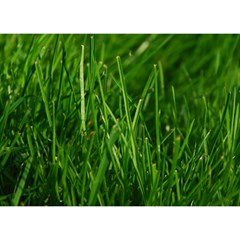 Green Grass 1 Birthday Cake 3d Greeting Card (7x5)