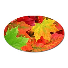 Autumn Leaves 1 Oval Magnet by trendistuff