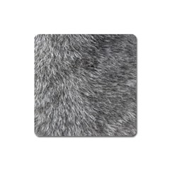 Grey Wolf Fur Square Magnet by trendistuff
