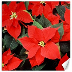 Poinsettia Canvas 12  X 12   by trendistuff