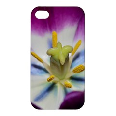 Purple Beauty Apple Iphone 4/4s Hardshell Case by timelessartoncanvas