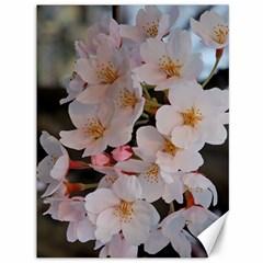 Sakura Canvas 36  X 48   by trendistuff