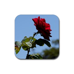 Red Rose 2 Rubber Square Coaster (4 Pack)  by trendistuff