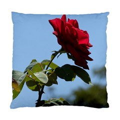 Red Rose 2 Standard Cushion Cases (two Sides)  by trendistuff