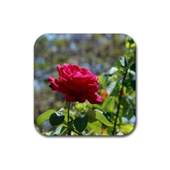 Red Rose 1 Rubber Square Coaster (4 Pack)  by trendistuff