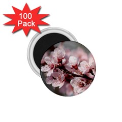 Plum Blossoms 1 75  Magnets (100 Pack)  by trendistuff