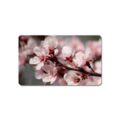 Plum Blossoms Magnet (name Card) by trendistuff