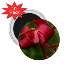 Lilium Red Velvet 2 25  Magnets (10 Pack)  by trendistuff