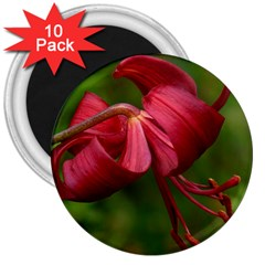 LILIUM RED VELVET 3  Magnets (10 pack)  by trendistuff