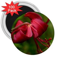 Lilium Red Velvet 3  Magnets (100 Pack) by trendistuff