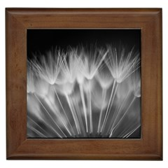 Dandelion Framed Tiles by trendistuff